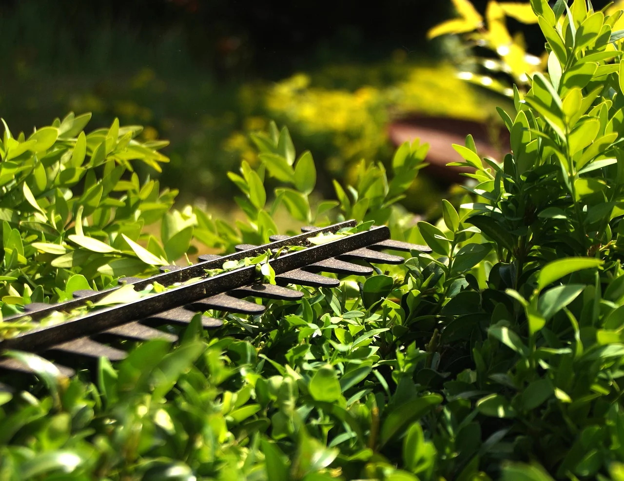 hedge-3393849_1280